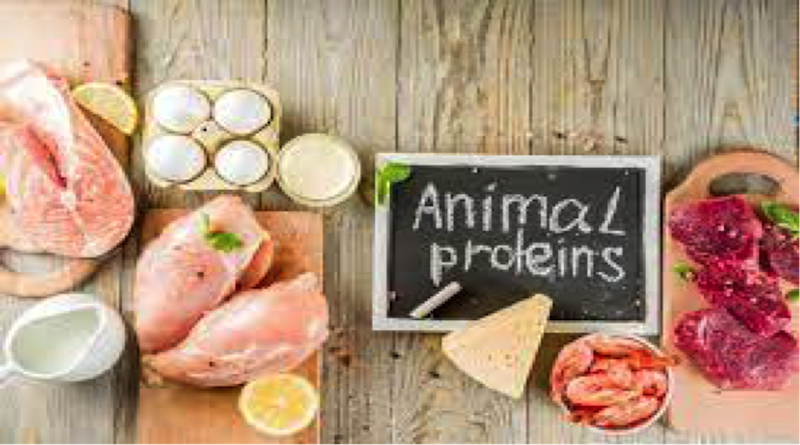 Animal-Based Protein