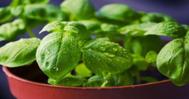 5 Herbs For Overall Health and Wellness